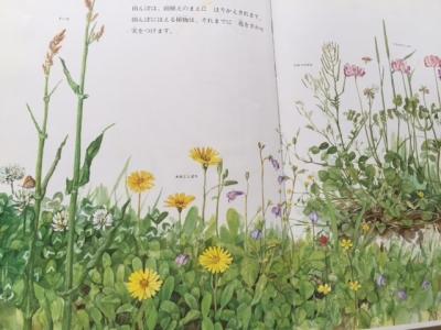野の草花2