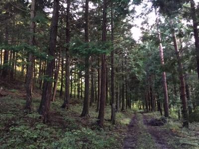 森と野原のワーク