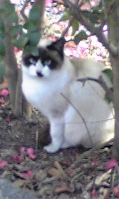 たぬき広場の野良猫ちゃん