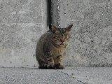 沖縄・奥武島のねこ