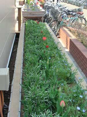 UDCKと駐輪場の間の花壇