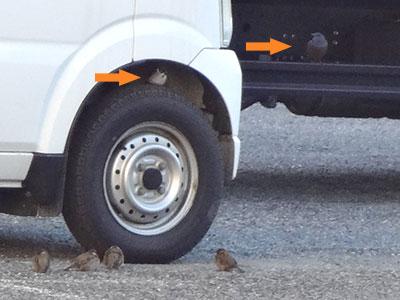 タイヤの近くのスズメ