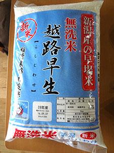 コシジワセ(越路早生)