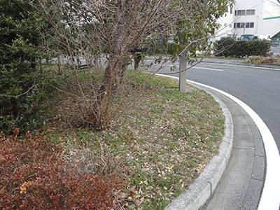 東京大学柏キャンパス内の道路