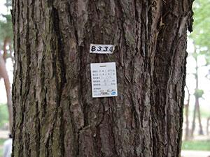 樹木のラベル