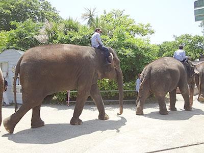 象さんお帰り