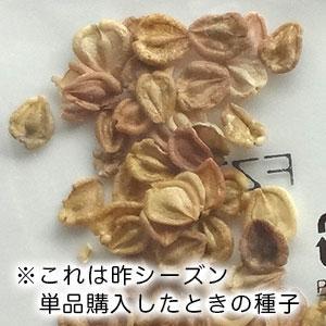 ディモルフォセカ種子単品