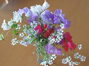 ミックスフラワーガーデンから咲いた花