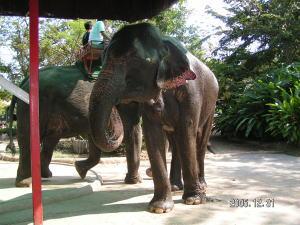象に乗ってお散歩