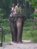 シンガポール動物園の象乗り