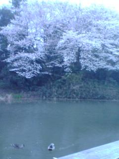 20100401180344.jpg