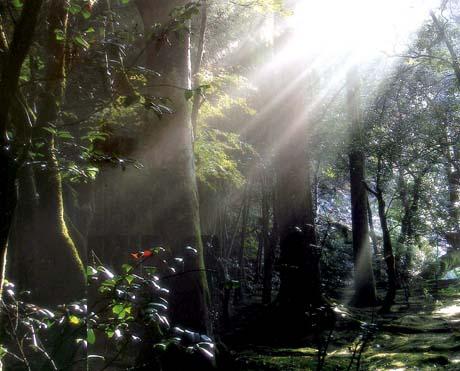 朝の光苔園