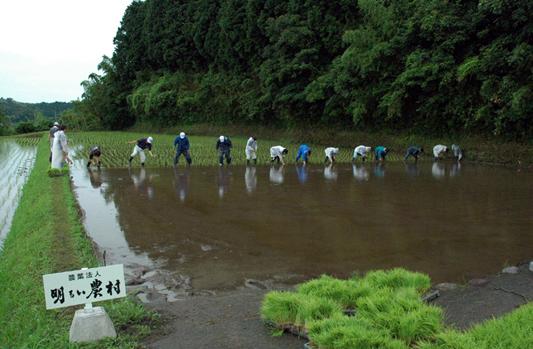 緑米田植え