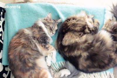 仲良く並んで寝る2匹