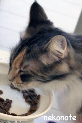 餌を食べるmoka