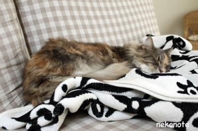 毛布で寝るmoka
