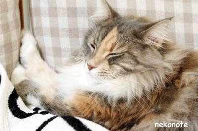 可愛い寝顔のmoka