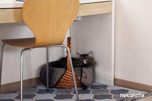 pc下にあるカゴベッドで休み中のkoo
