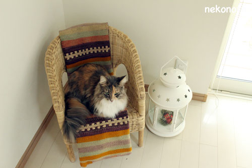 mokaの冬の寝場所