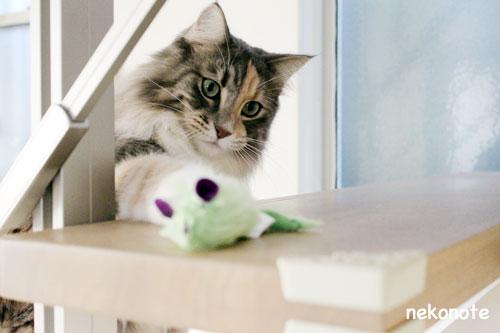 ネズミを狙うmoka