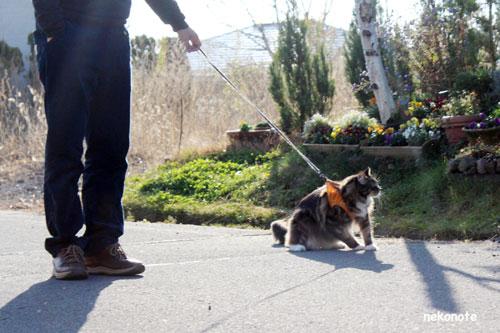 長野の道を散策するkoo