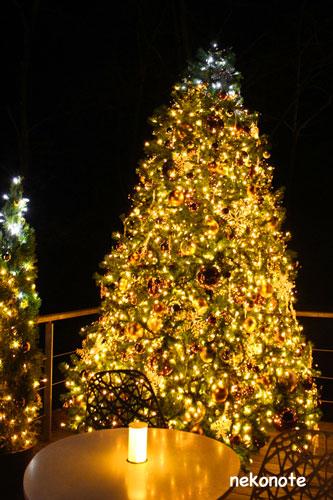 クリスマスのハルニレ