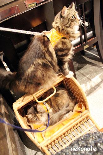 三清洞の店内でのkooとmoka