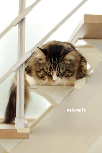 たれ猫koo