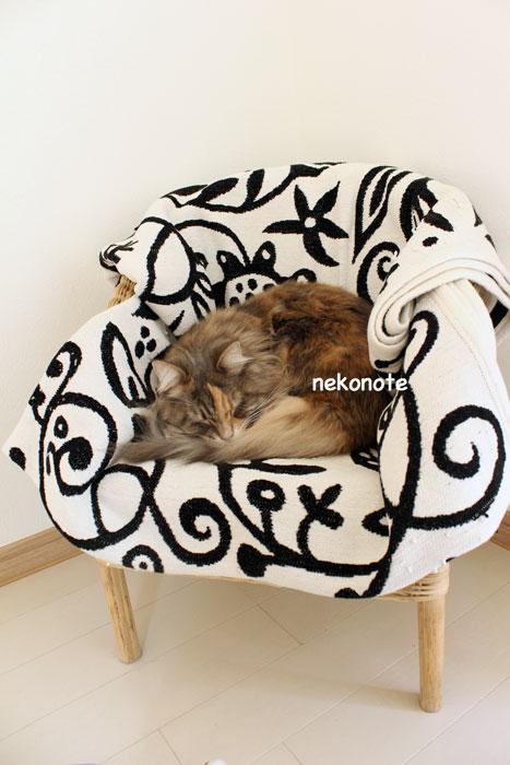 mokaのベッド