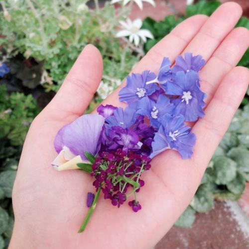 押し花制作-お花を用意