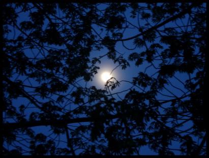 月明かり.jpg
