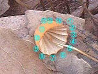 hana-harigane (1).jpg