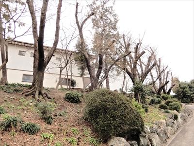 2020神蔵寺 (2).JPG