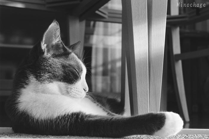 グレピ猫びよりの写真