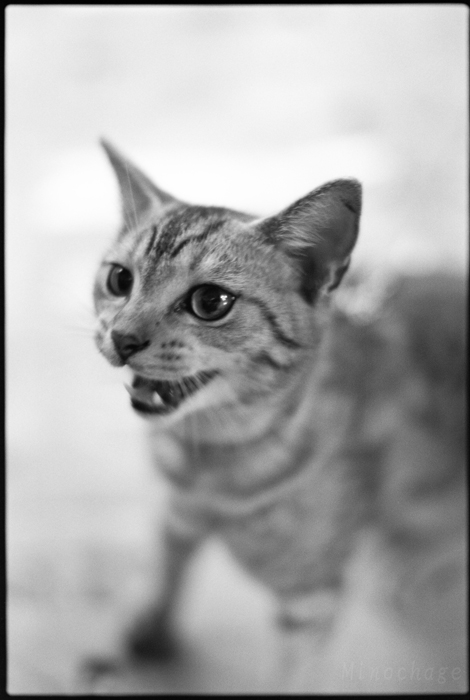 迪化街の子猫君