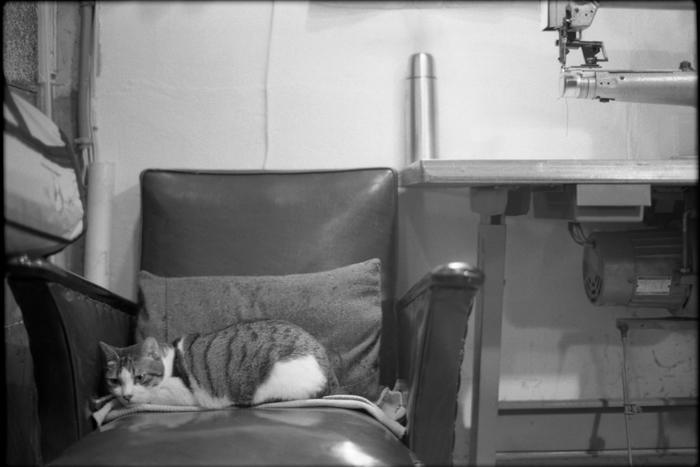 Figure21の猫君