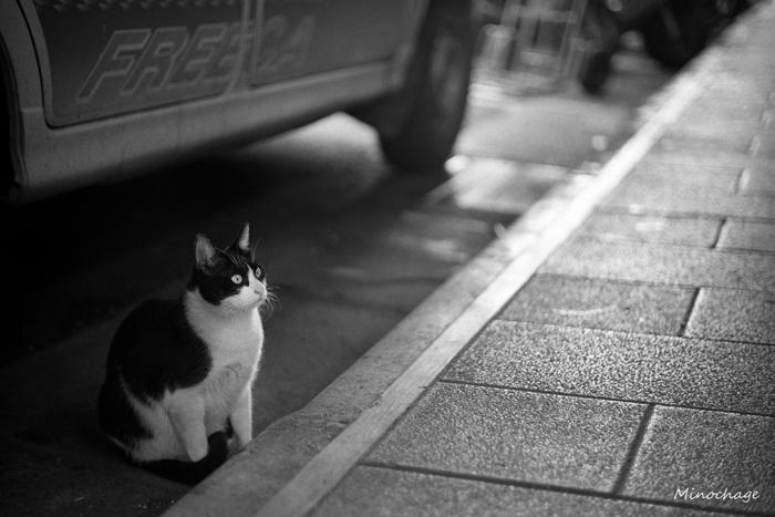 迪化街の猫