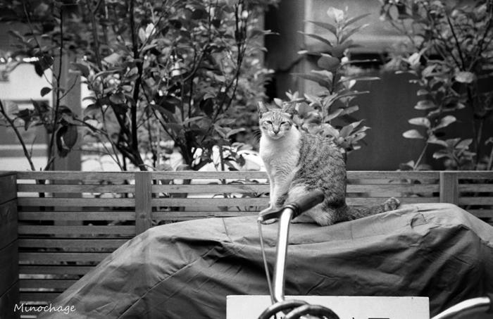 台北で出会った猫