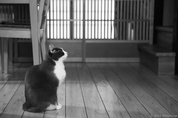 家内を待つグレピ