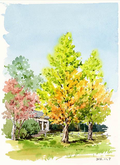 秋 メタセコイア 紅葉