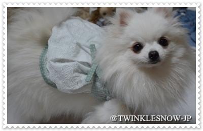 pomeranian ホワイトポメラニアン 犬服 ペット服 TWINKLENSOW犬舎