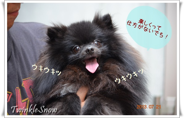 ブラックポメラニアン 子犬