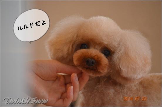 交配犬 TWINKLESNOW