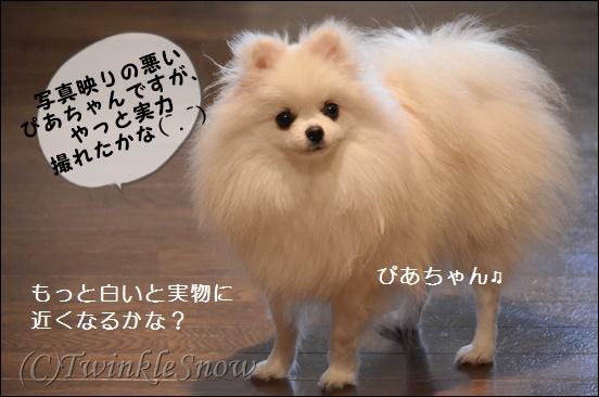 TWINKLESNOW ぴあちゃん