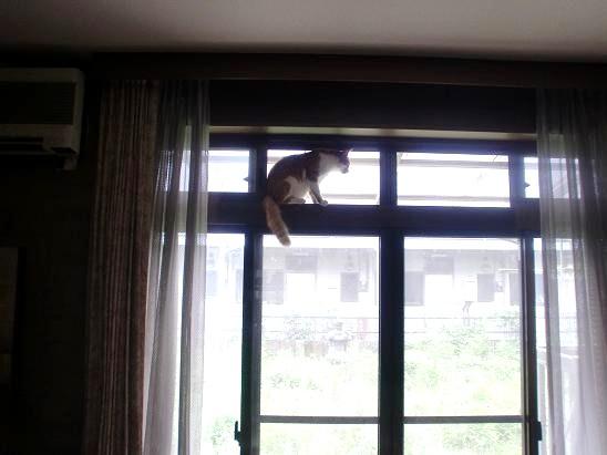 今日の猫たち.JPG