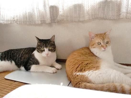 今日の猫たち?.JPG
