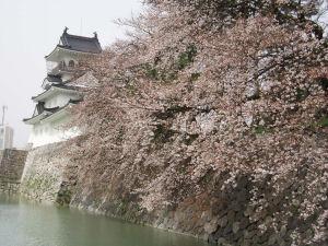 富山城の桜