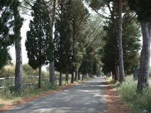 ネクロポリへの松並木