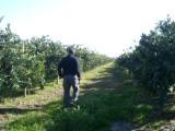 イチローさんとミカン農場