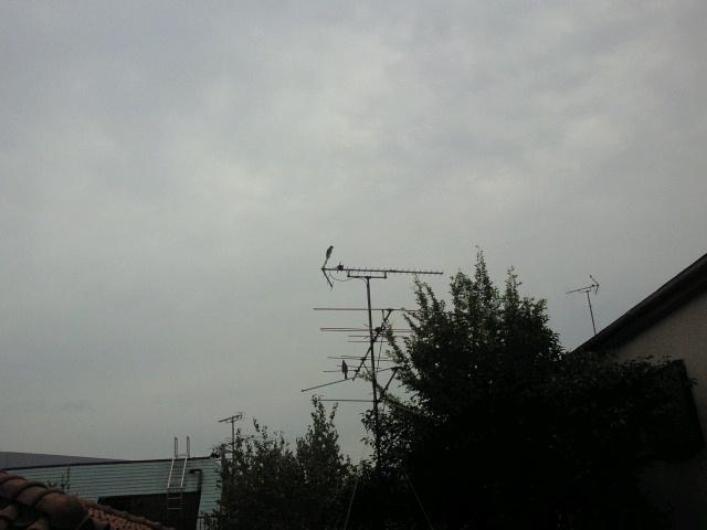 2011110313250000.jpg